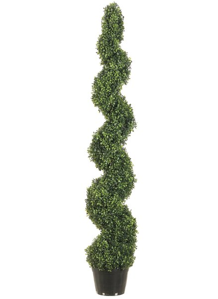 Pond Boxwood Spiral Top Topiary in Pot by Darby Home Co