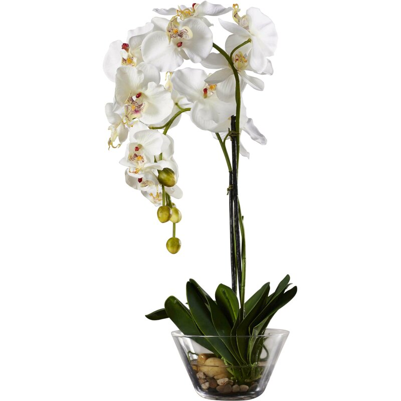 Phalaenopsis Silk White Orchid In Glass Vase Reviews Birch Lane