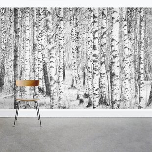 Snow Covered Birch Tree 8 X 144 3 Piece Wall Mural