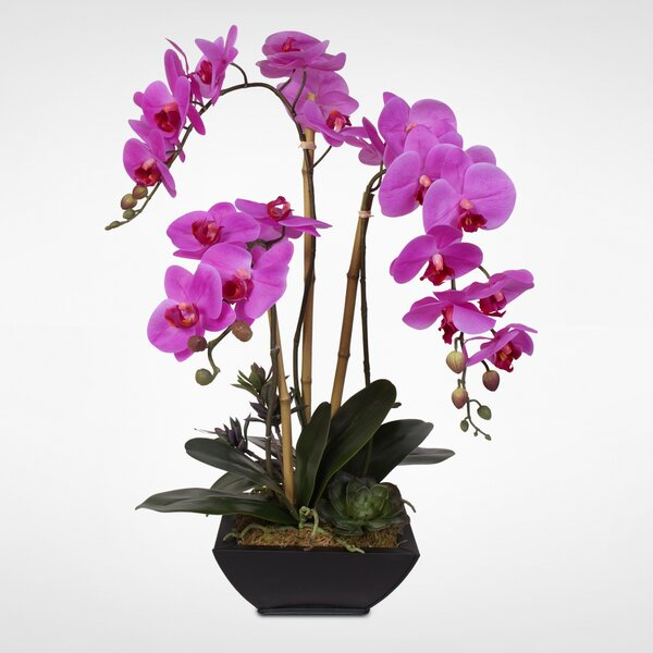 Handmade Phalaenopsis Silk Orchid Floral Arrangement in Pot by Everly Quinn