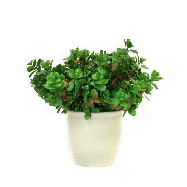 Faux Jade Succulent Plant in Pot by Darby Home Co