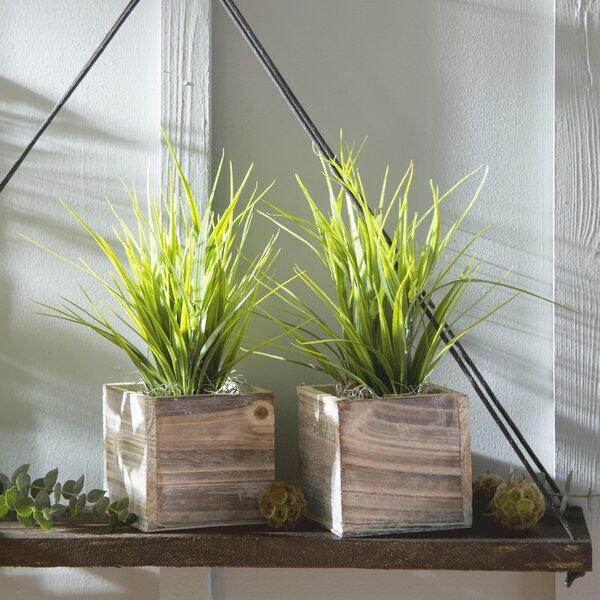 Faux Grass in Square Wooden Planter (Set of 2) by Laurel Foundry Modern Farmhouse