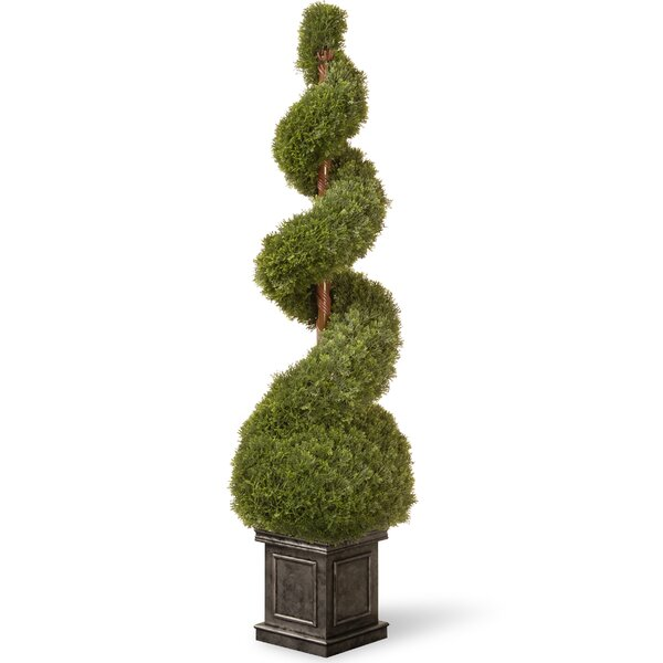 Cedar Spiral Tree with Ball in Square Pot by National Tree Co.
