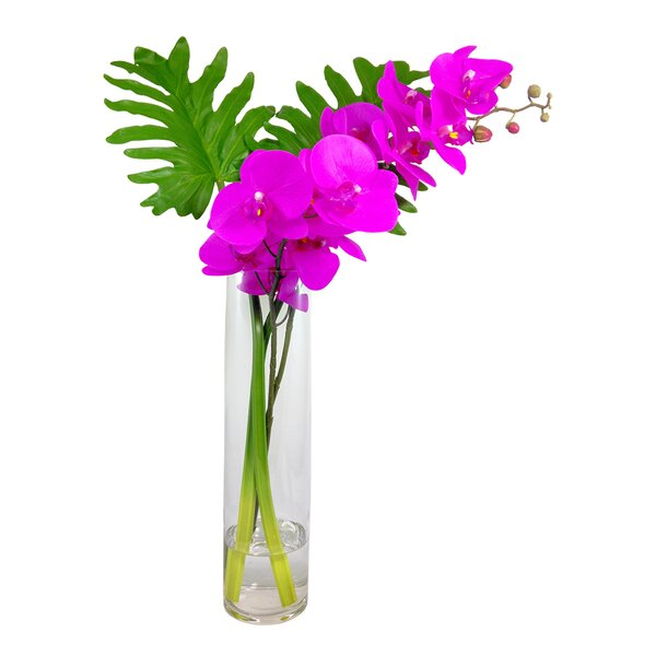 Phalaenopsis Orchid Xanadu Leaves Floral Arrangement in Vase by Bayou Breeze