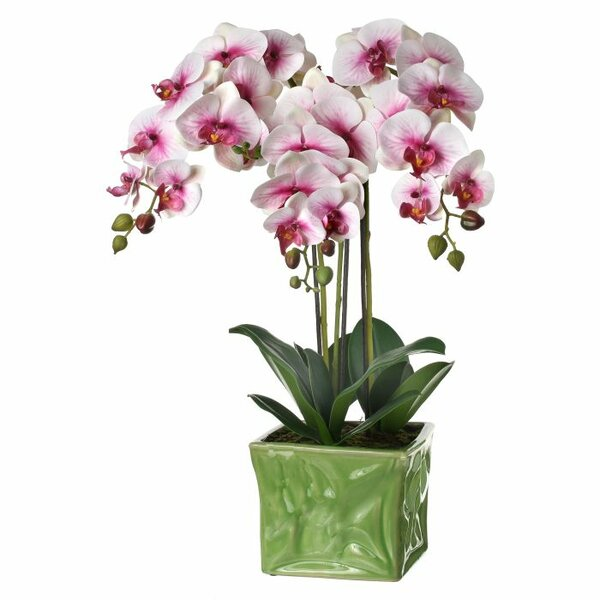 Phalaenopsis Orchids Floral Arrangement in Pot by Bloomsbury Market