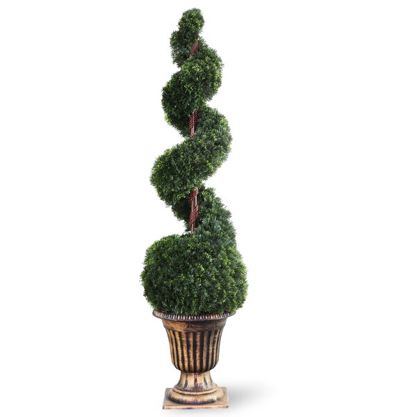 Cedar Spiral Topiary in Urn by National Tree Co.