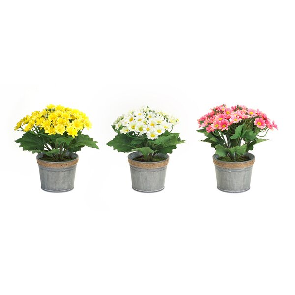 3 Piece Flowering Plant in Pot Set by Melrose International