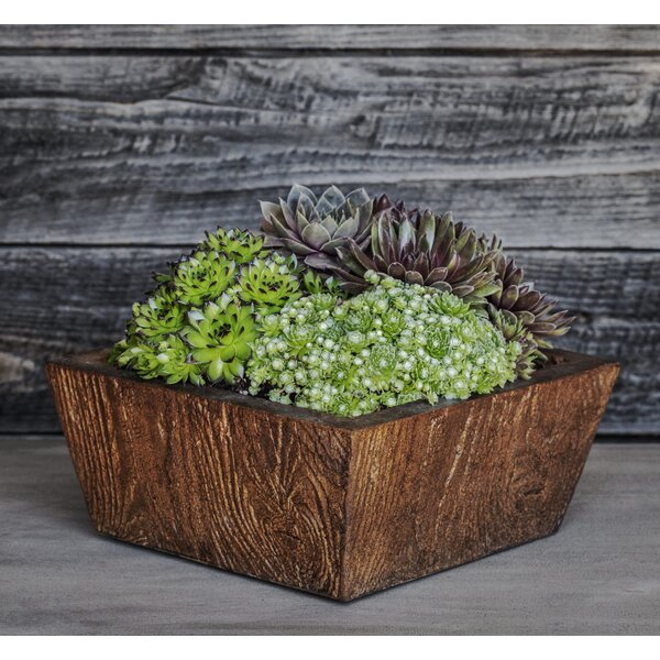 Ravishankar Square Tapered Cast Stone Planter Box by Union Rustic
