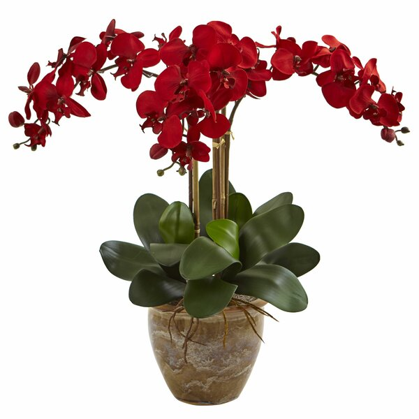 Orchids Floral Arrangement in Decorative by Blooms
