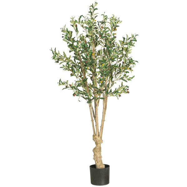 Olive Tree in Pot by Fleur De Lis Living