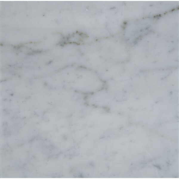Carrara 18 x 18 Natural Stone Field Tile in Gray by MSI