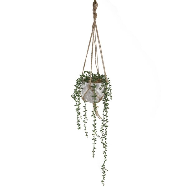 Ceramic Donkey Tails Hanging Succulent Plant by George Oliver