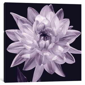 'White Dahlia I' Graphic Art Print on Canvas by Willa Arlo Interiors