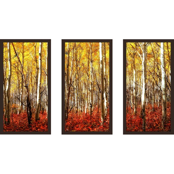 Birch Trees 3 Piece Framed Photographic Print Set by Picture Perfect International