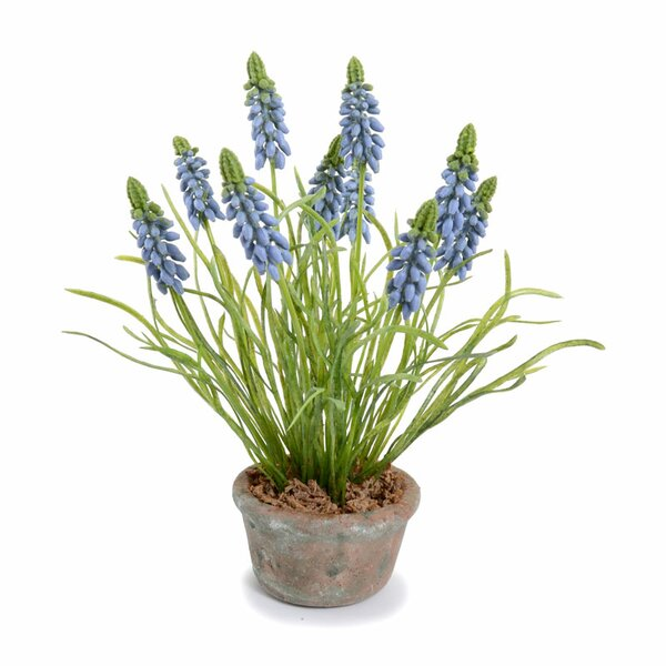 Grape Hyacinth Floral Arrangement in Pot by Ophelia & Co.