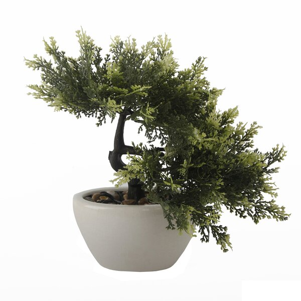 Desktop Bonsai Tree in Pot by World Menagerie