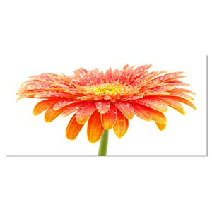 'Large Orange Gerbera on White' Graphic Art on Wrapped Canvas by Design Art