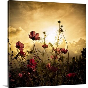 'Watching the Sun' Photographic Print on Canvas by Latitude Run