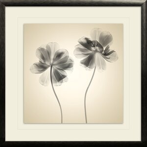 Soft I by Judy Stalus Framed Photographic Print by Star Creations