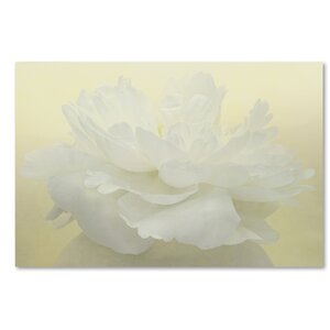 Pure White Peony by Cora Niele Photographic Print on Wrapped Canvas by Trademark Fine Art