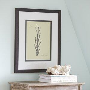 Reef Framed Print I by Birch Lane™