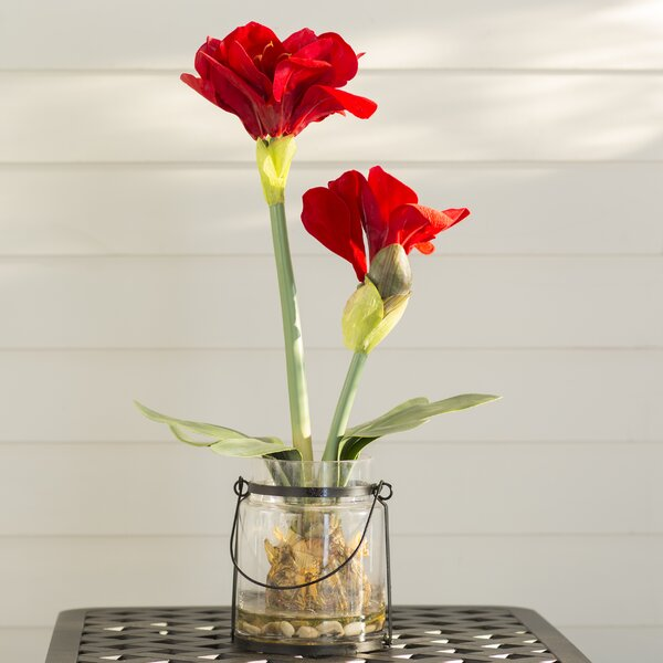 Amaryllis Arrangements by Three Posts