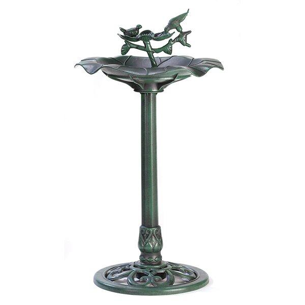 Verdant Pedestal Birdbath by Zingz & Thingz