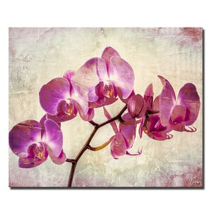 'Painted Petals XVIII' Painting Print on Canvas by Latitude Run