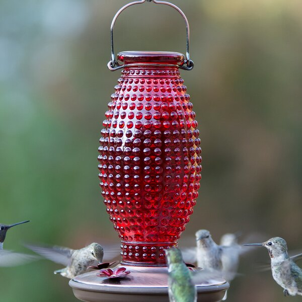 Hobnail Vintage Hummingbird Feeder by Perky Pet