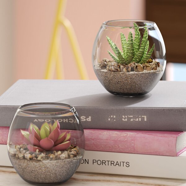 2 Piece Succulent Plant in Pot Set by Willa Arlo Interiors