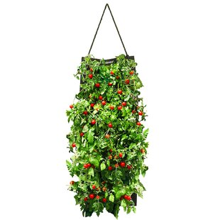 Touch of Eco Organic Hanging Cherry Tomato Growing Kit