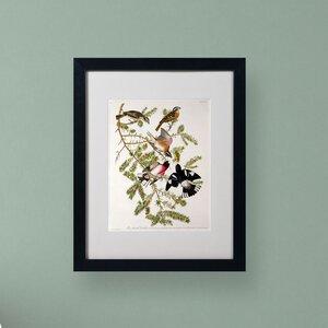 Rose-Breasted Grosbeak by John James Audubon Matted Framed Painting Print by Trademark Fine Art