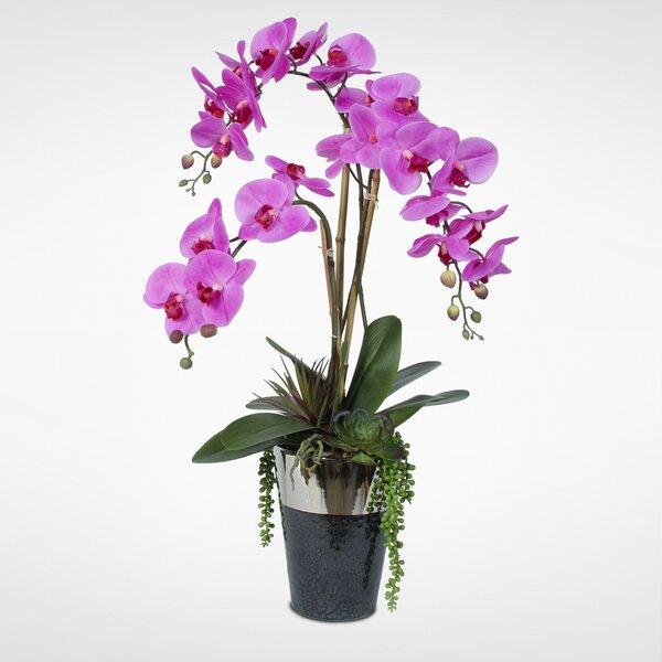 Phalaenopsis Orchid with Succulents Floral Arrangement in Vase by Orren Ellis
