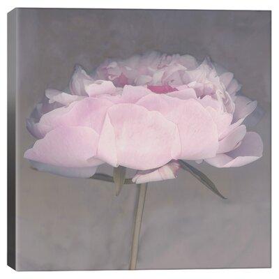"""'Jolie' Print Lark Manor Format: Canvas, Size: 37"""" H x 37"""" W x 0.75"""" D"""