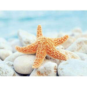 Sea Star Dreams Photographic Print by Cortesi Home