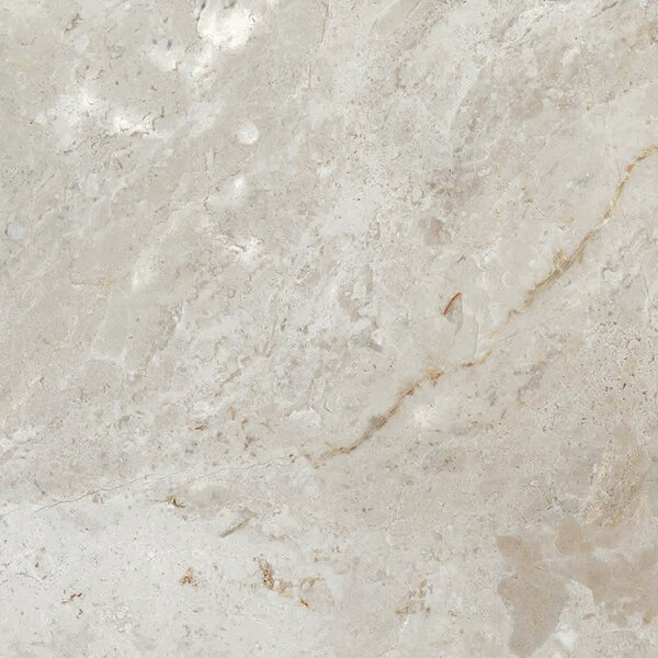 Peyton 12 W x 12 Porcelain Field Tile in Cool Gray by Parvatile
