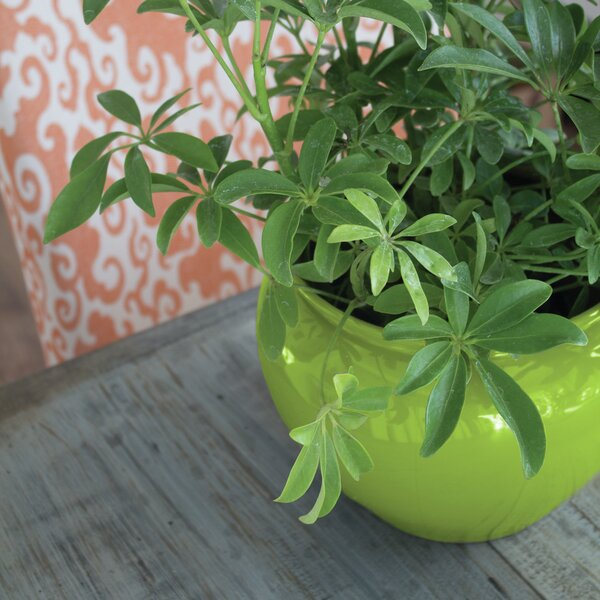 Self-Watering Plastic Pot Planter by Syndicate Sales