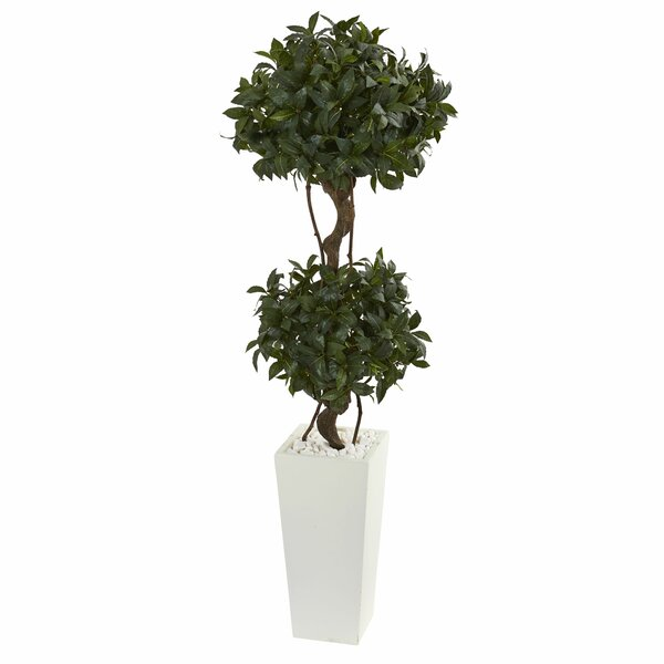 Sweet Bay Double Ficus Topiary in Tower Planter by Fleur De Lis Living