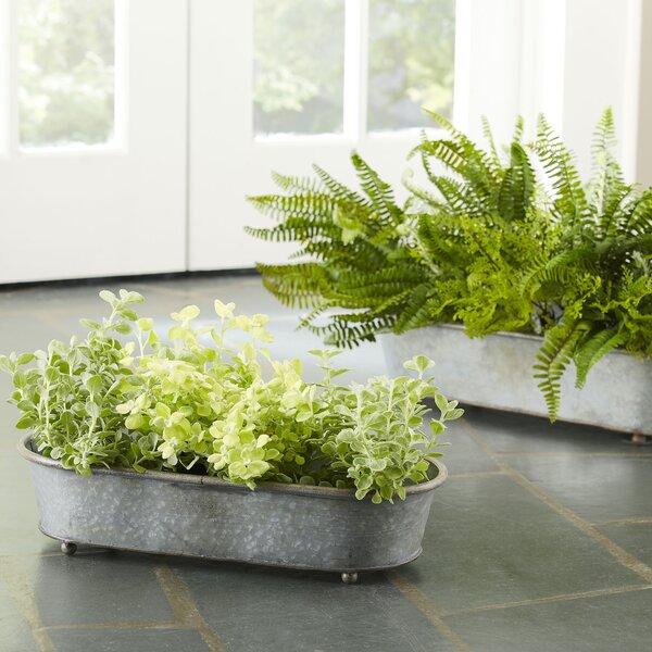 Galvanized Steel Pot Planter Set by Birch Lane™