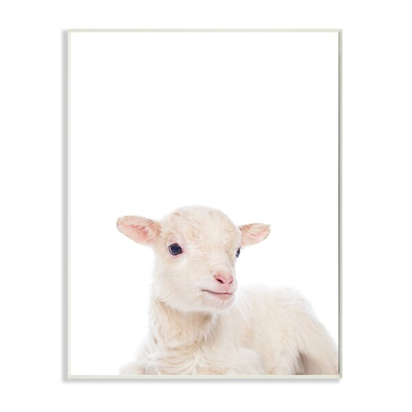 Baby Lamb Studio Photo Wall Plaque by Stupell Industries