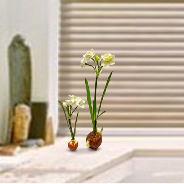 2 Piece Weighted Bulb Flowering Branch in Pot Set by August Grove