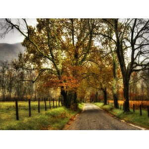 Rainy Morning on Sparks Lane by Danny Head Wrapped Photographic Print on Canvas by Art Effects