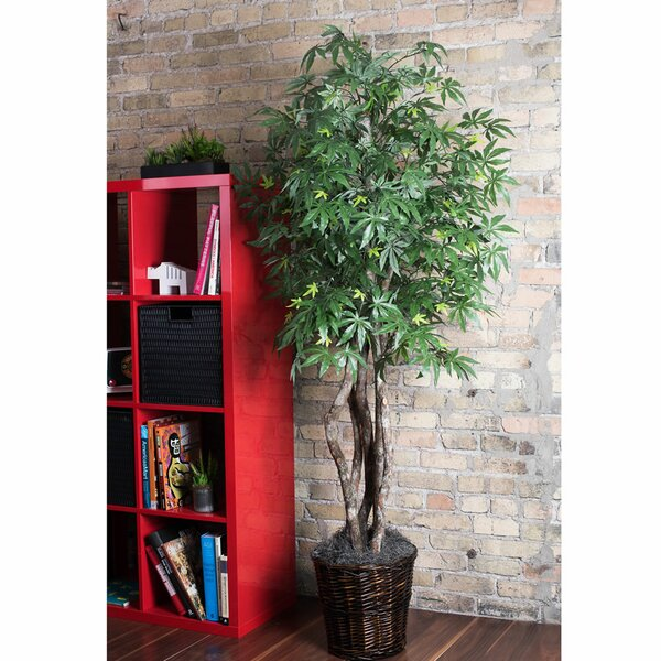 Japanese Maple Tree in Basket by World Menagerie