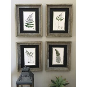Vintage Botanical Fern 4 Piece Framed Painting Print Set by Floral Home Decor