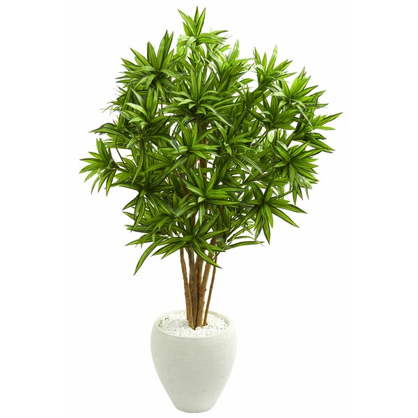 Dracaena Floor Foliage Tree in Planter by Orren Ellis
