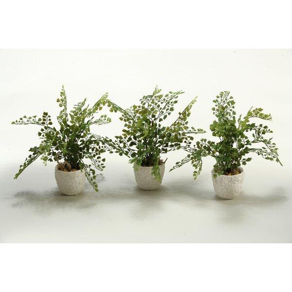 3-Piece Maiden Hair Tabletop Fern in Decorative Vase Set (Set of 3) by D & W Silks