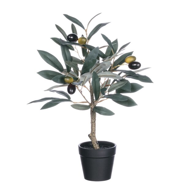 Potted Olive Floor Ficus Plant (Set of 2) by Fleur De Lis Living