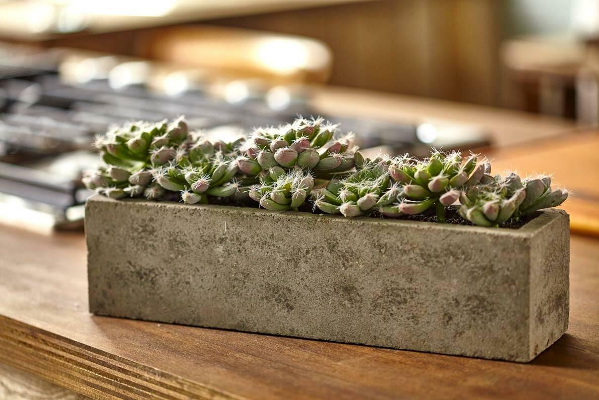 Greyleigh Succulent Garden Desk Top Plant in Planter & Reviews | Wayfair