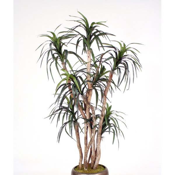 Dracaena Tree in Jar by Distinctive Designs