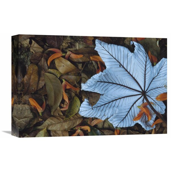 Nature Photographs ecropia Leaf Atop Lobster Claw Petals on Tropical Rainforest Floor, Mesoamerica by Gerry Ellis Photographic Print on Wrapped Canvas by Global Gallery